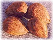 Apricot Seeds (Prunus armeniaca 'blenheim')