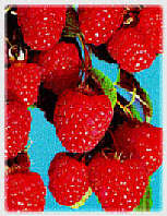 Meeker raspberry extract, source of our ellagic acid