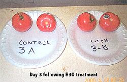 Tomato Test - 3 days following H3O treatment
