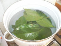 Ajo Leaves in the Pot